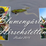 Impressionen Hirschstetten im Herbst 2016