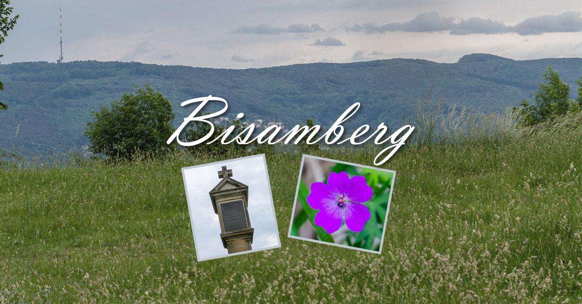 Impressionen vom Bisamberg 2017