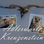 Impressionen von der Adlerwarte Kreuzenstein